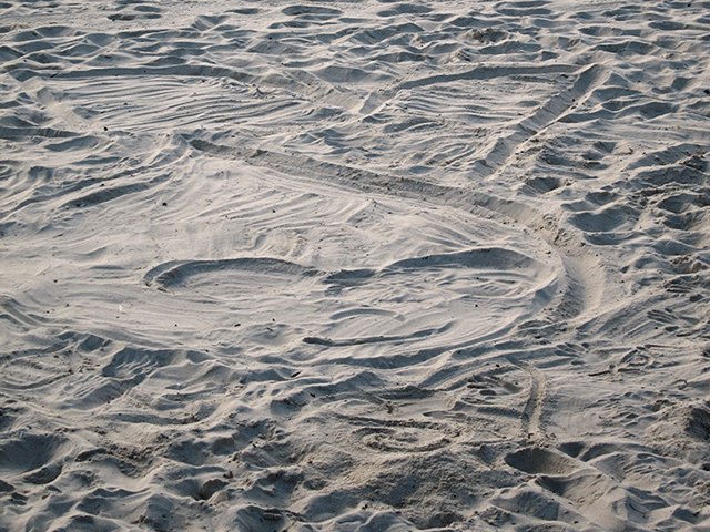 Druplicon, drawn in the sand on Coogee Beach.