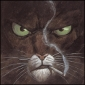 Blacksad's picture